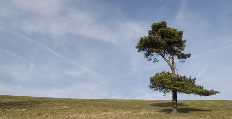 Tree on Wind Hill