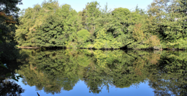 Loxley Valley mill pond